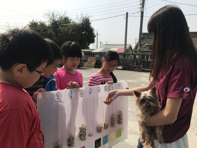 羅令婕與趙廷軒帶學生訪問村民「子茂村的代表色」,並讓村民用子茂村特色作物「花生」的殼進行投票。圖/羅令婕提供