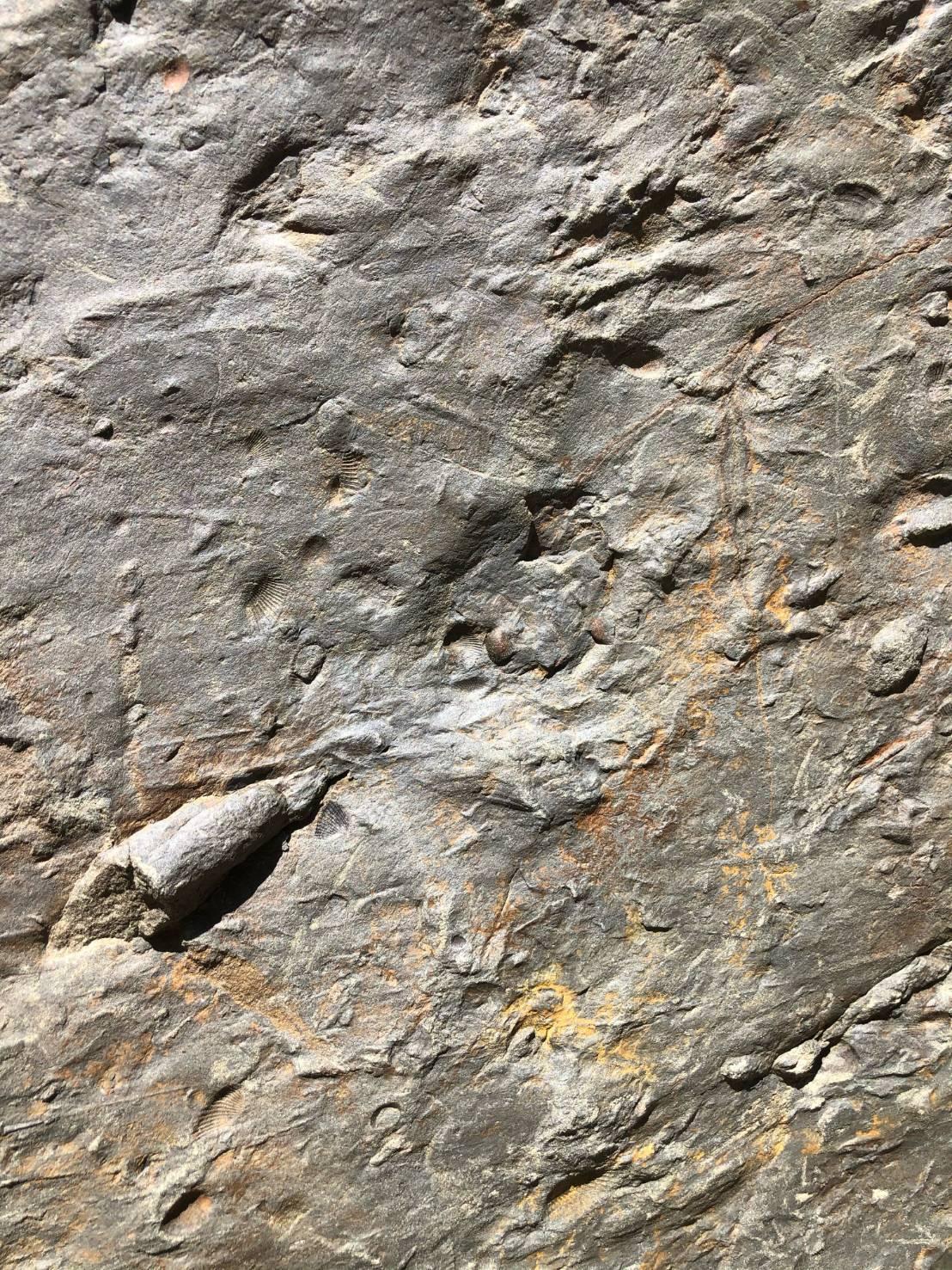 桃園市武陵高中師生日前單車環島考察時,意外發現古生物活動的遺跡石塊,經玉管處協同...