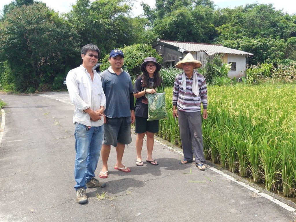 農友朱金萬自主將友善耕作的彩田米採樣有無農藥殘留。圖/新北市農業局提供