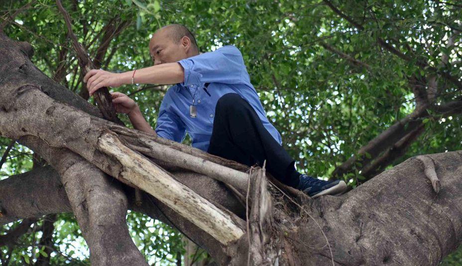 網友KUSO高雄市長韓國瑜爬樹查看樹洞積水的照片不斷傳送,反有助韓國瑜的網路聲量上升。圖/高雄市政府新聞局提供