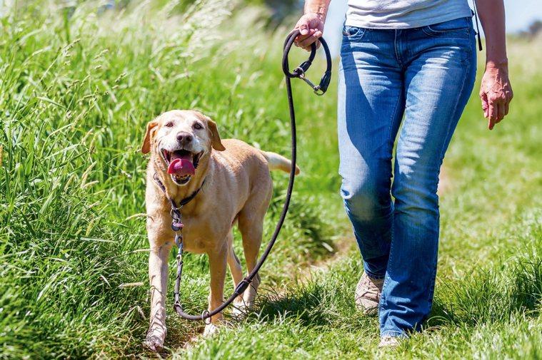 也許你不相信,每天走點路就可防殘疾?然而調查顯示,腿腳有關節炎的長者,每周只要走...