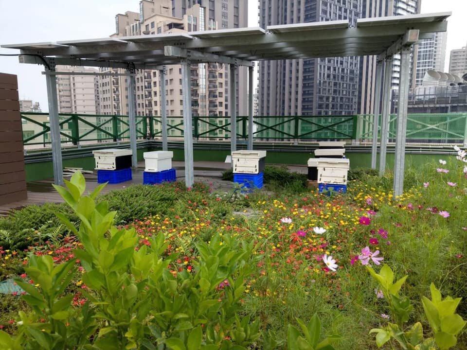 三民家商利用綠屋頂養蜂,自然和諧。圖/三民家商提供