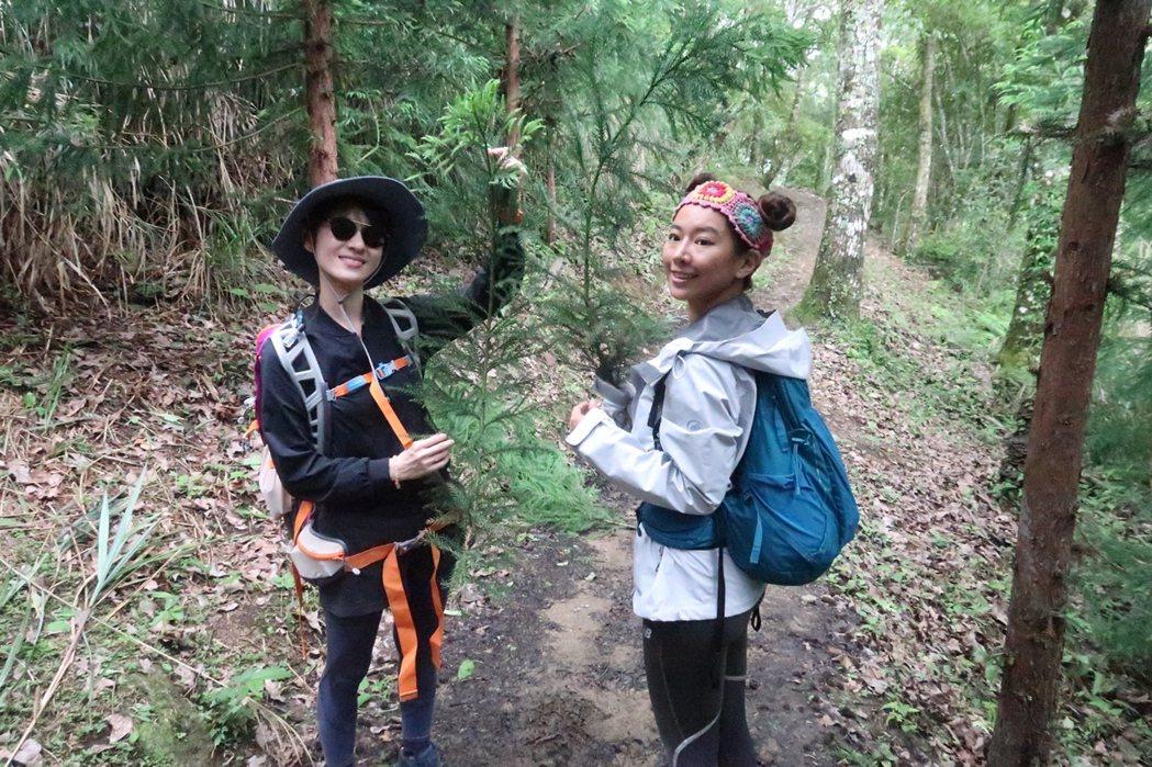 謎卡Mika(右)幫連俞涵挑選帶下山裝飾家裡的樹枝。圖/凱特文化提供
