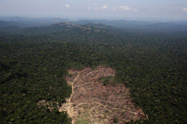巴西是全球大豆最大生產國,不過生產大豆卻是造成森林濫砍濫伐的主因。圖為遭砍伐的巴...