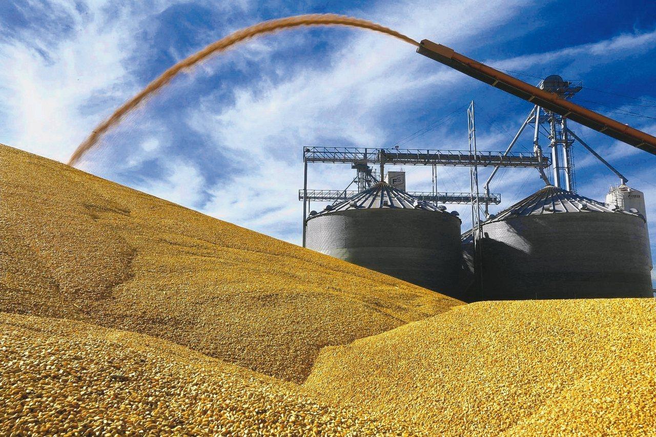 有外媒報導,美國農產品因美中貿易戰受重傷,台灣近期將向美國購買大豆、玉米、小麥等...