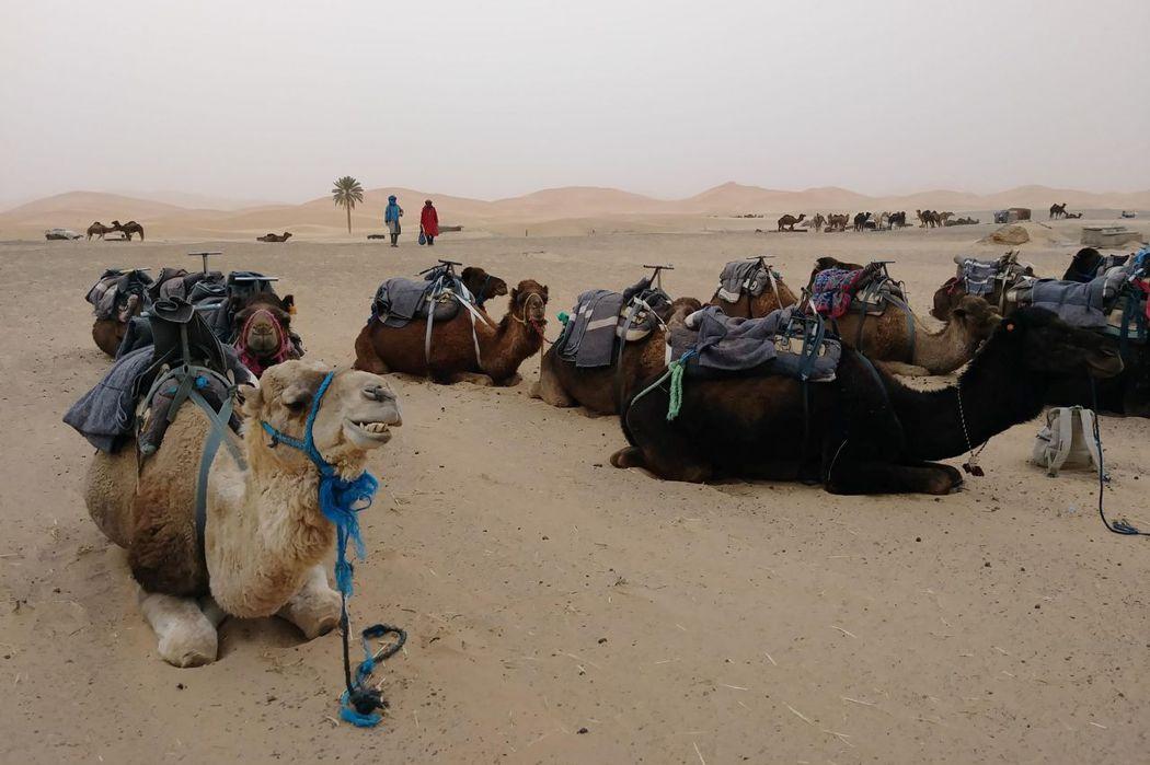 摩洛哥撒哈拉沙漠/在無邊沙丘經歷沙漠風暴