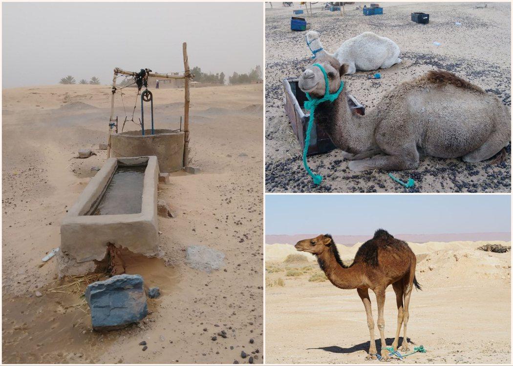 在沙漠裡行走,才真的體會到水和駱駝對生活在沙漠的人,有何等的重要。
