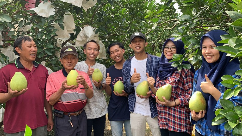 台灣首府大學今年有22名印尼籍學生投入麻豆文旦採果。記者吳淑玲/攝影