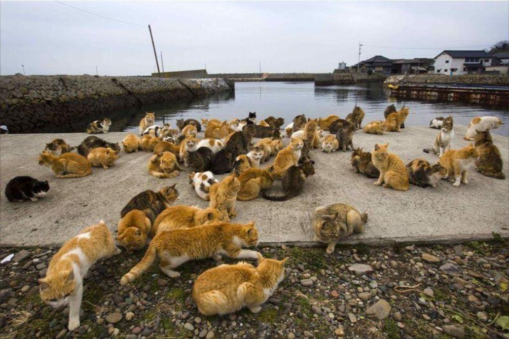 日本福岡著名景點、被稱為「貓島」的青島是不少貓奴必到「潮聖地」,近日發現島上貓隻...