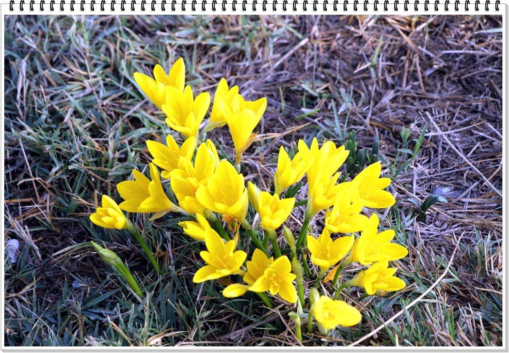 在古城廢墟的土地上,小野花也不會吝嗇它的表現力量,伸出草地,見證生命的敬畏。