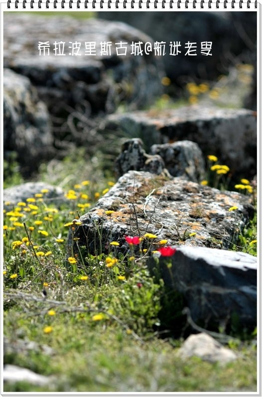 滄桑的石塊旁盛開的野花,又有另種風情。