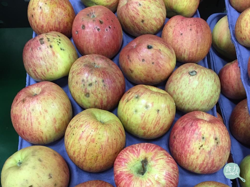 苦痘症的蘋果削皮後很明顯能夠看到果肉呈現褐色、海綿狀,還會帶有苦味。 圖片提供/...