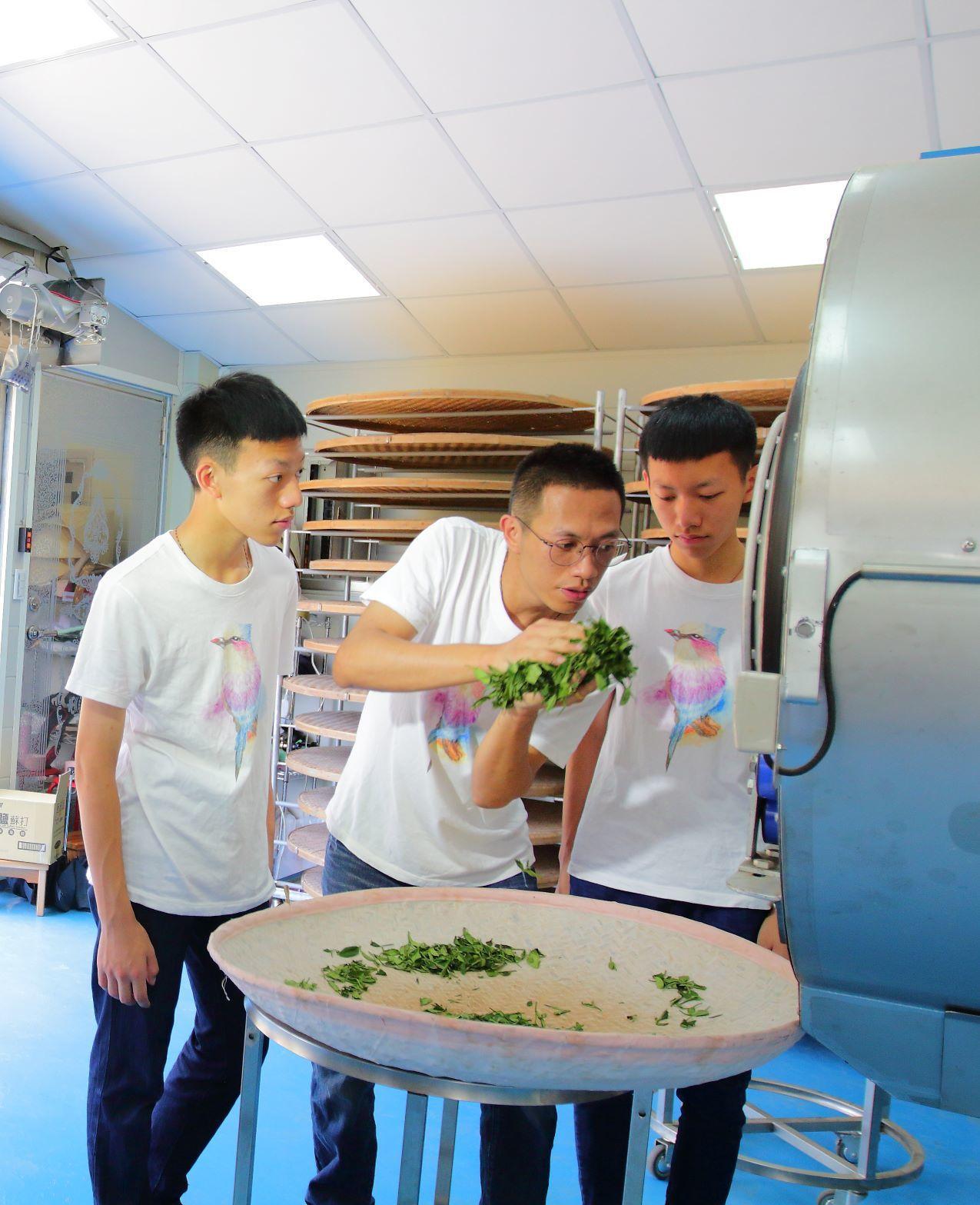 雙胞胎李柏儒、李璟旻跟父親學習如何製茶。圖/新北市農業局提供