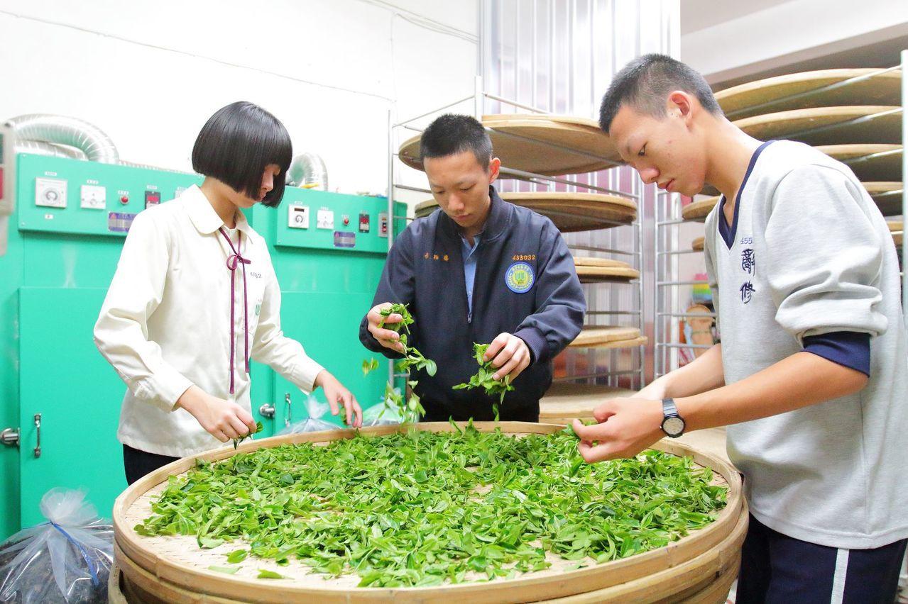 李昱萱、李柏儒、李璟旻3姐弟發現三峽茶產業逐漸沒落,下定決心未來要接手三峽有機碧...