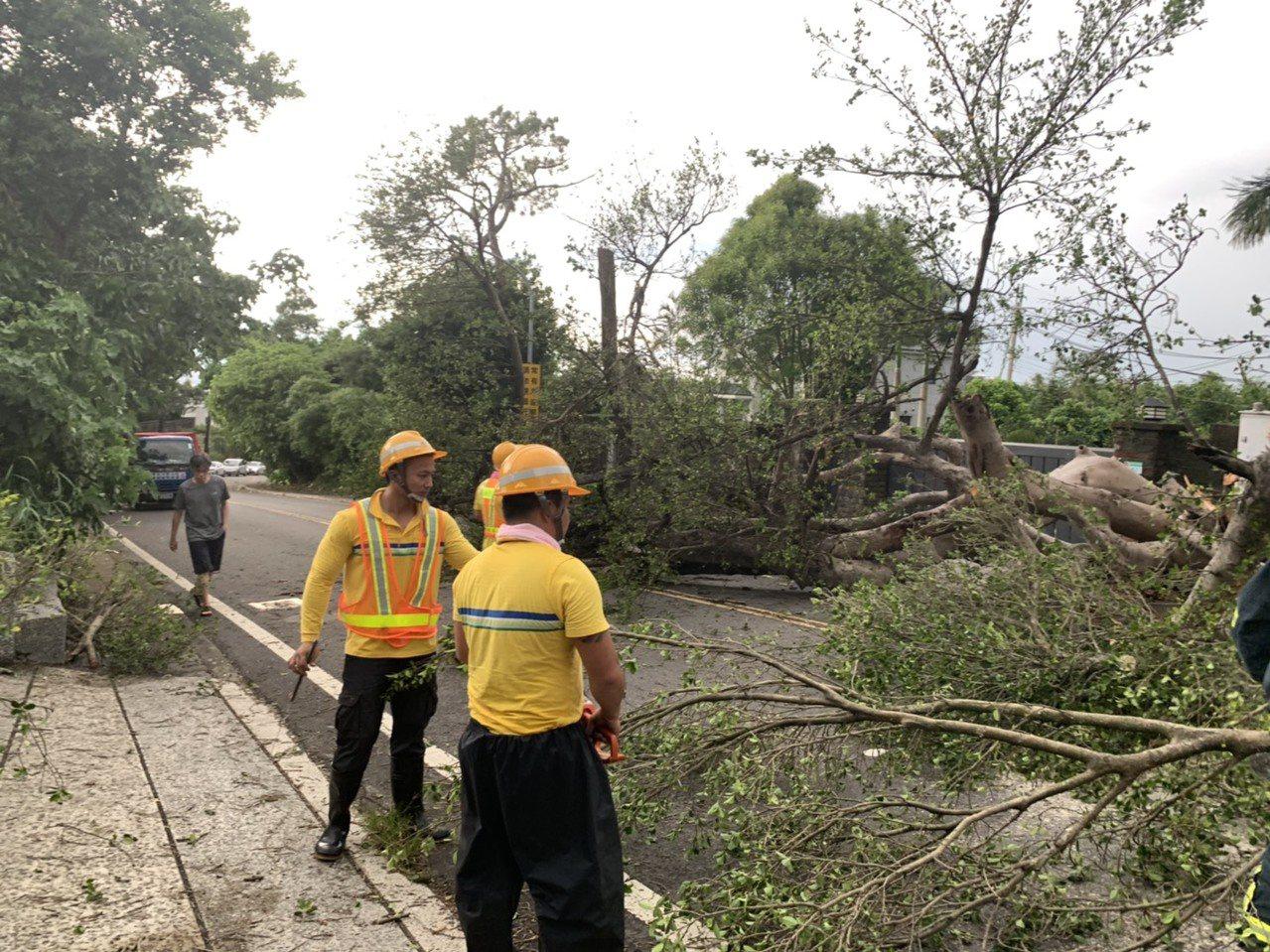 陽明山區今天下午驚傳巨大路樹倒塌,當場砸中機車男騎士頭部。記者蔡翼謙/翻攝