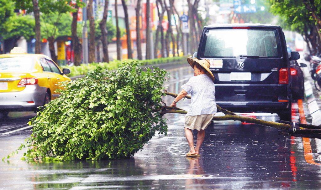 颱風利奇馬來襲,風雨時強時弱,但仍造成部份路樹傾倒。 記者杜建重/攝影