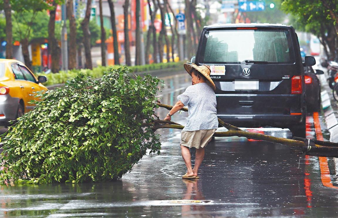 利奇馬颱風來襲,風雨時強時弱,造成部分路樹倒塌。記者杜建重/攝影