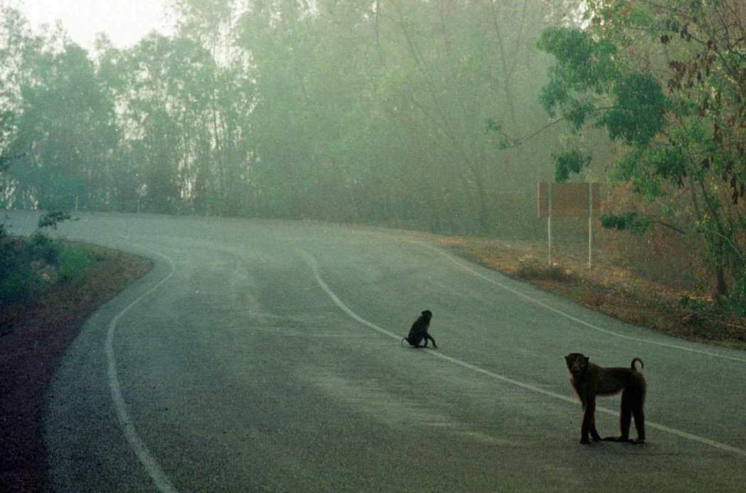 印尼東加里曼丹省的森林可望成為印尼新首都地點。美聯社