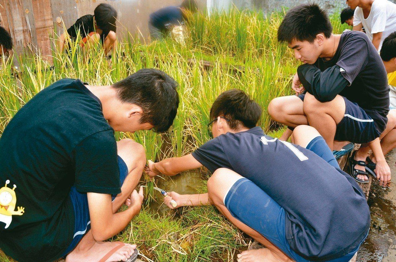 建中為新生開了16門多元選修課,包括教學生種稻的「永續的餐桌」,很受歡迎。圖/建...