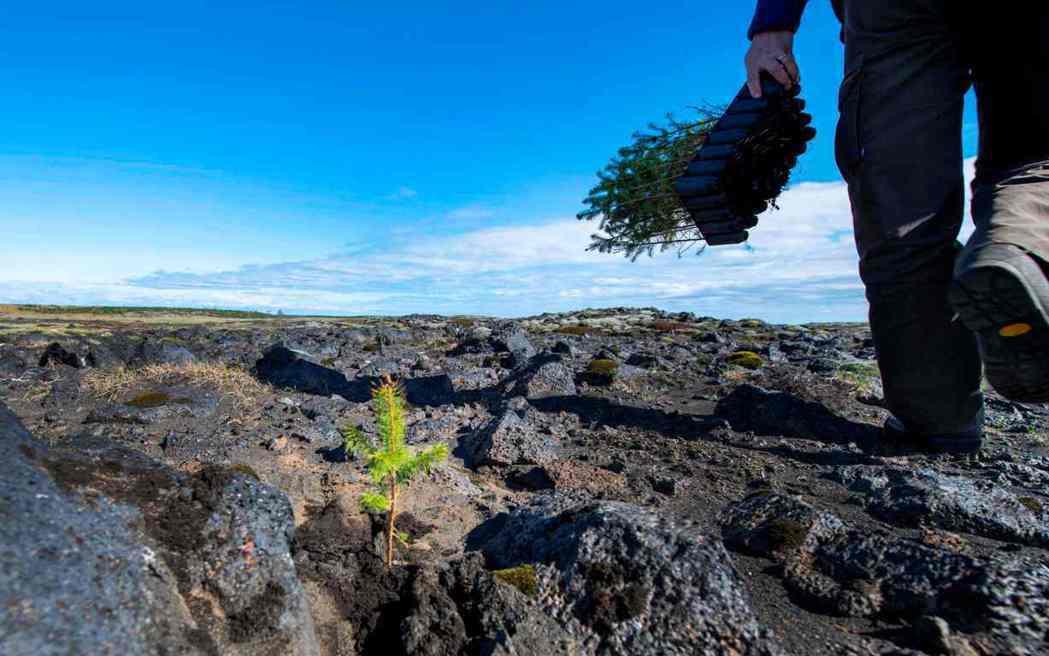 回歸傳統農法是減少二氧化碳進入大氣層的有效方法之一。 圖/法新社