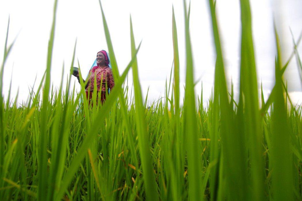 施行「再生農法」是能恢復受損大氣層的希望。 圖/美聯社