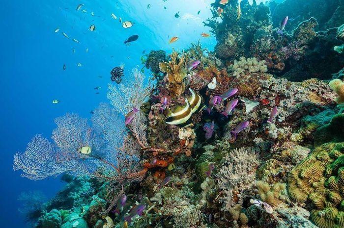 大堡礁潛水體驗 圖/IG, saberience