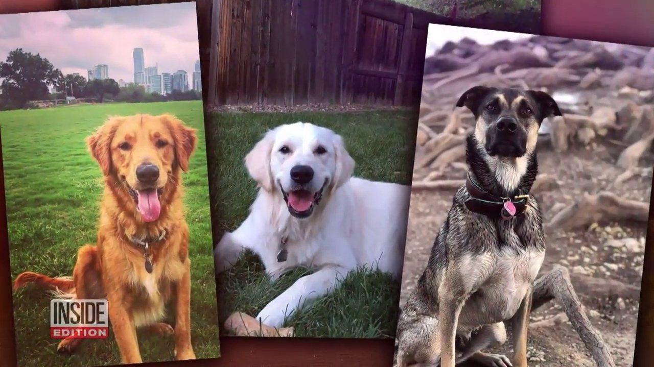 美國德州奧斯汀的「瓢蟲湖」近期一連有3隻狗狗先後在湖中玩耍後,都在不到一個小時內...