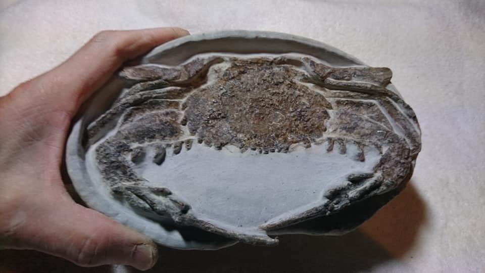 林景文隻身在屏東恆春半島投入長達36年的化石採集工作,已收集的4萬件化石中,不乏...