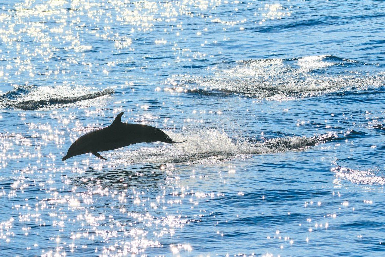 不同的光線,讓海洋有了不一樣的感覺。 【青春名人堂】金磊/夏日午後的陽光