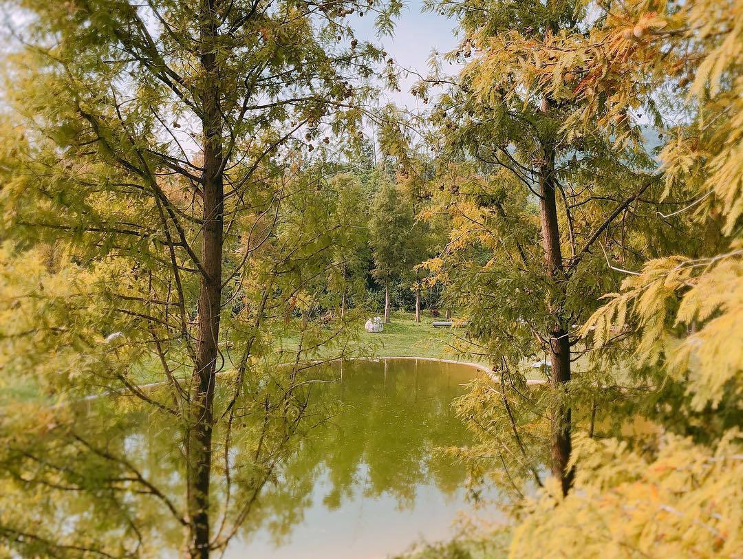 大樂之野景觀餐廳的愛心池塘有大片落羽松包圍,宛如仙境一般。圖/IG網友mimit...