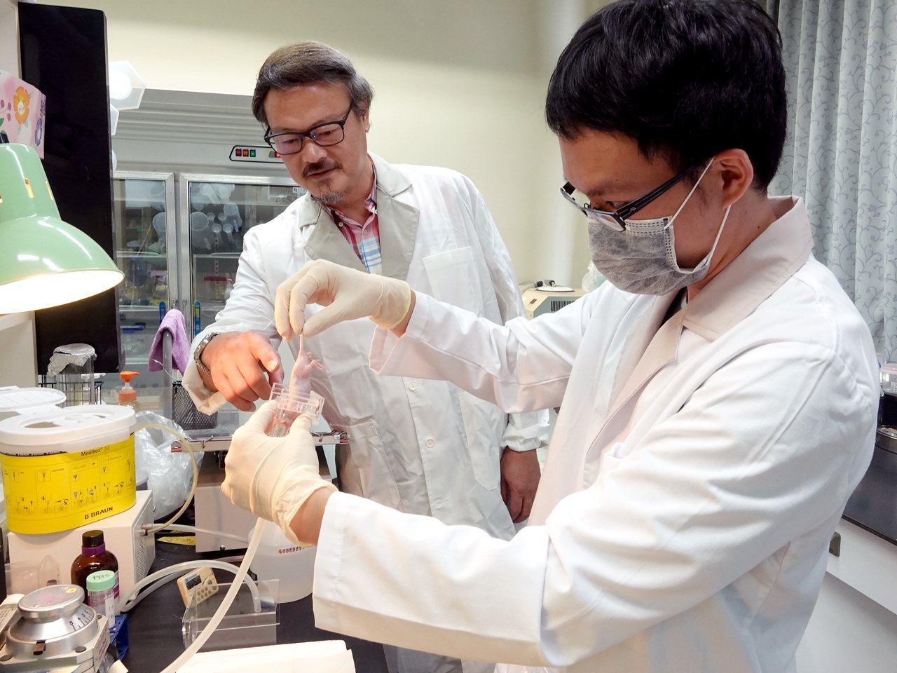 中正大學生物醫學科學系教授張德卿,近期成功利用仿造人類多瘤性病毒殼體蛋白質,做為...