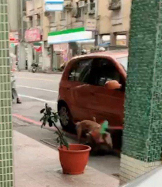 基隆市陳姓男子飼養比特公犬「ROCK」,今年1月間在中正路咬死一隻流浪狗。檢方認...