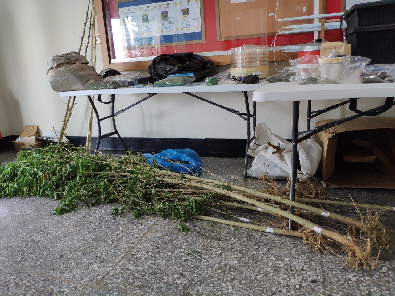 台糖仁德虎山農場傳出有人偷種大麻;警方查扣大批大麻活株。記者謝進盛/攝影