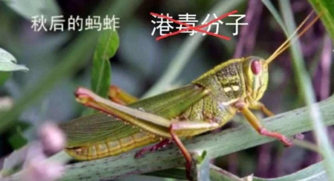 文章配上一張蝗蟲圖片,圖片上有「港毒分子」被打交叉的配文。取自解放軍東部戰區陸軍...