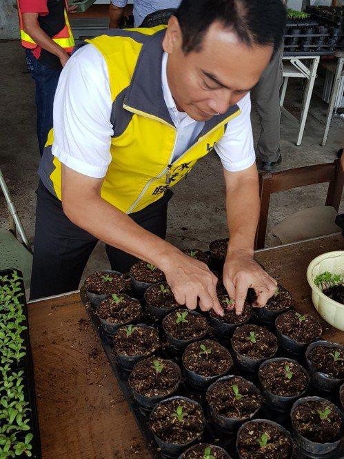 竹山鎮公所清潔隊將廚餘變為有機土,用以培育種植花卉,計畫打造花園城鎮。圖/竹山鎮...