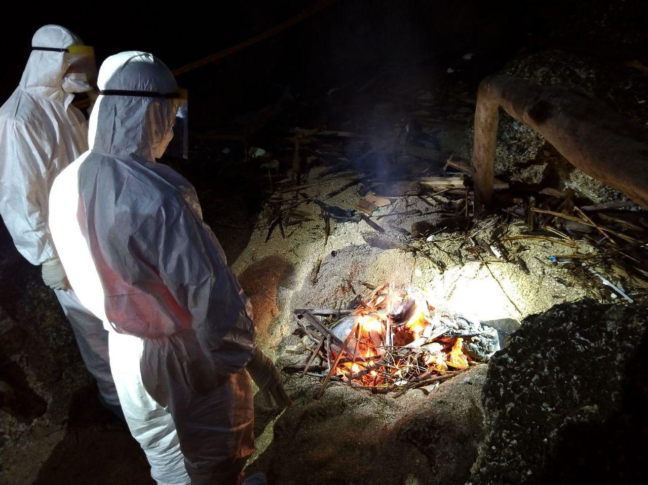 屏東離島小琉球龍蝦洞旁昨晚發現1隻豬屍,防疫人員採集檢體後送家畜衛生試驗所檢驗,...