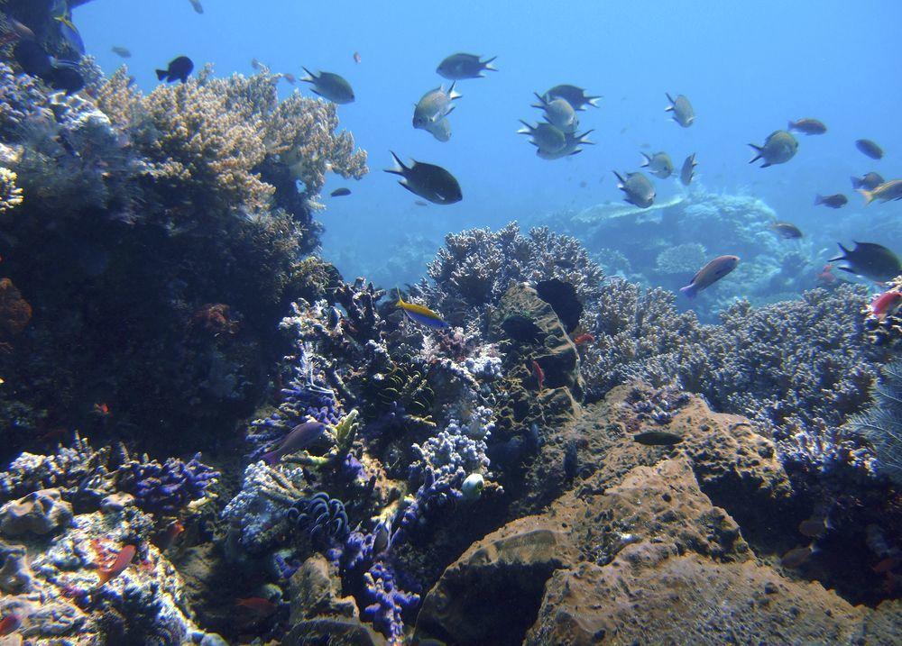 印尼科摩多國家公園地區海洋生態活躍。(美聯社)