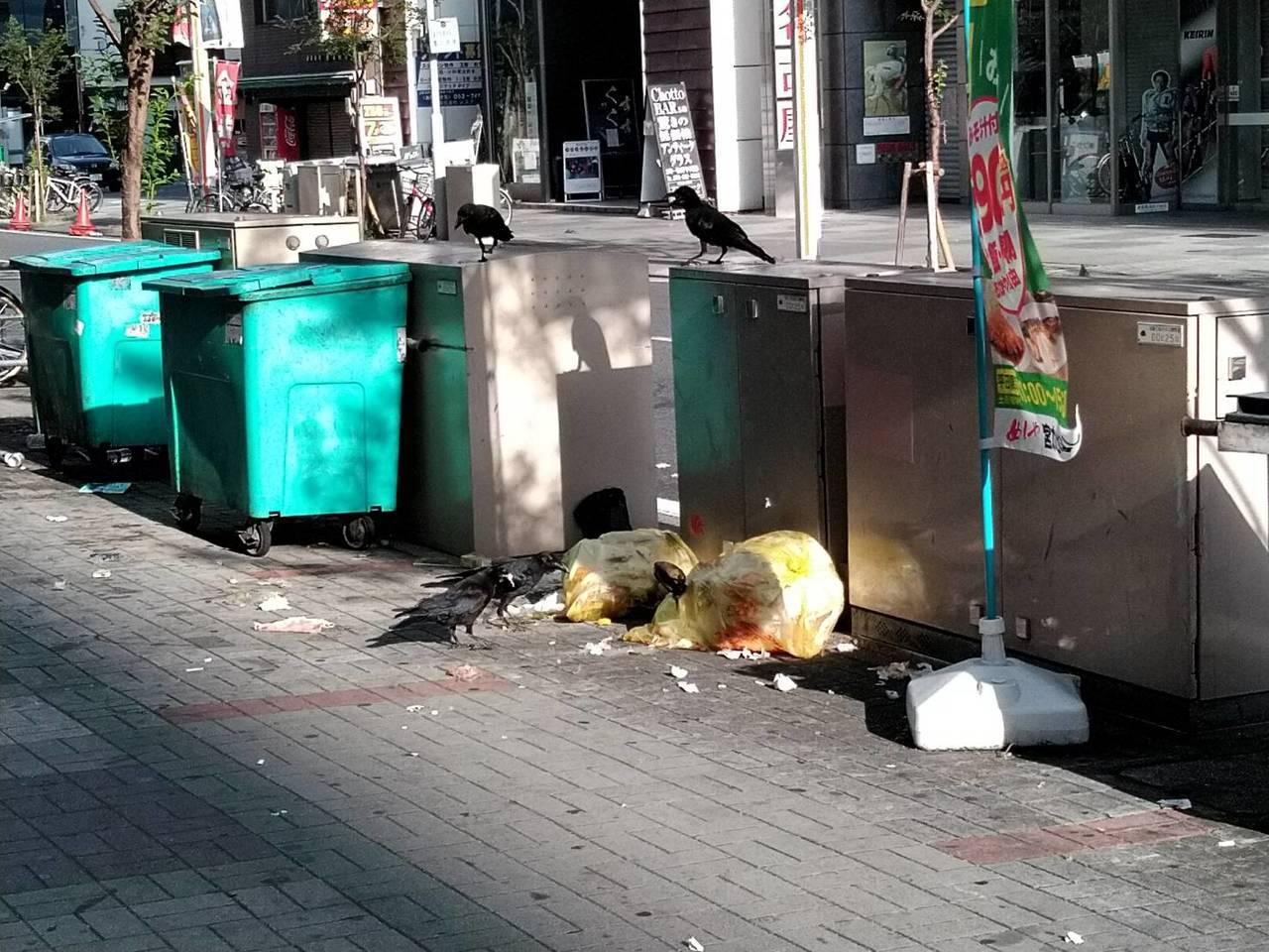 日本街道也有髒亂的時候,且常見烏鴉咬破垃圾袋。圖為名古屋市區街道。 圖/陳姓網友...