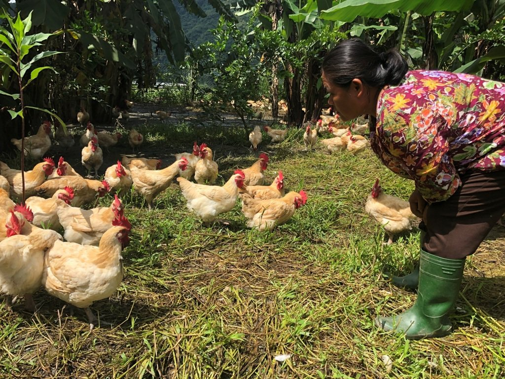 岩生築見攜手小農,一起養出風味好雞。 圖/岩生築見提供