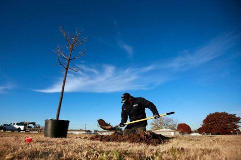 植樹人人都可以參與,現在馬上就能做,且成本又便宜。 圖/歐新社