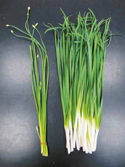 韭菜、洋蔥、大蒜等辛香味的蔬菜,建議要切碎、拍打後食用,才能讓食物中的抗氧化物與...