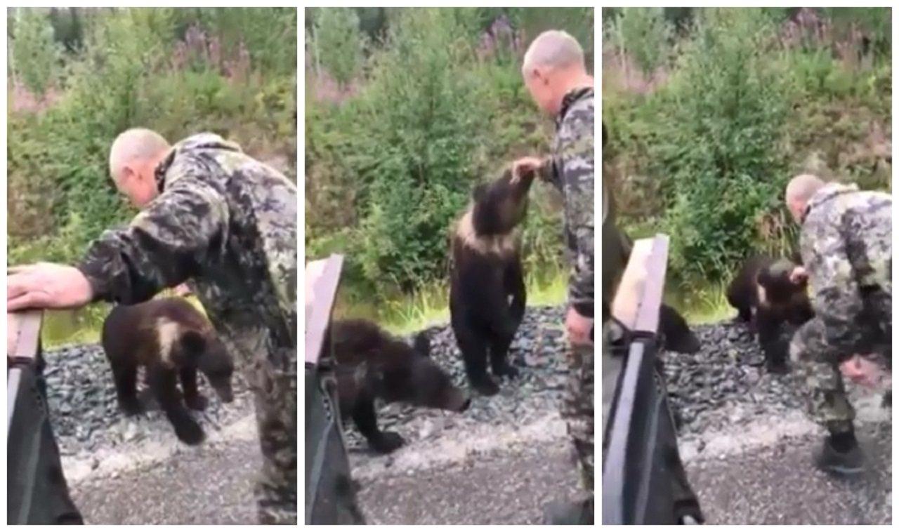 俄羅斯一名「醉漢」日前被拍到伸手想逗弄小熊,卻被小熊一口咬住後拖走。男子好不容易...