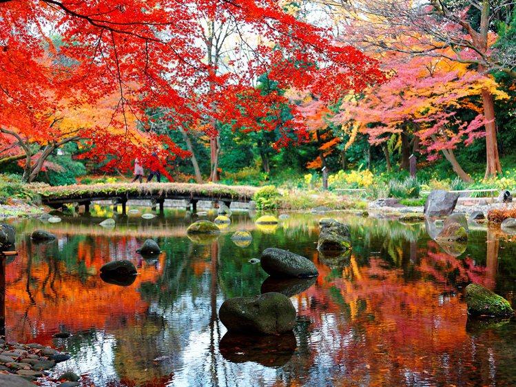赴日賞楓是國人秋季最喜愛的主題旅遊。圖/易遊網提供
