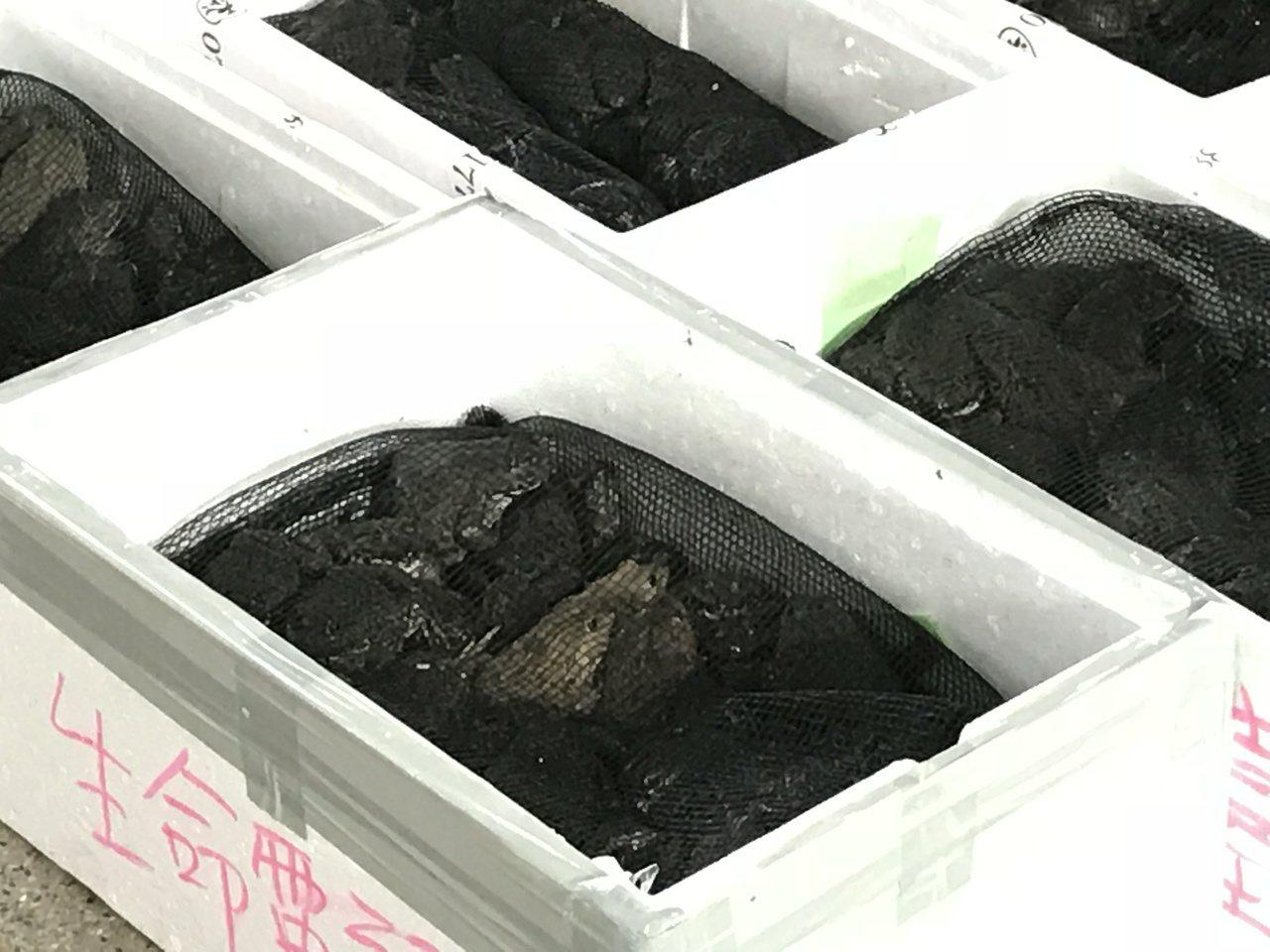 嘉市漁市場普度法會 海濤語出驚人「放生蟒蛇」