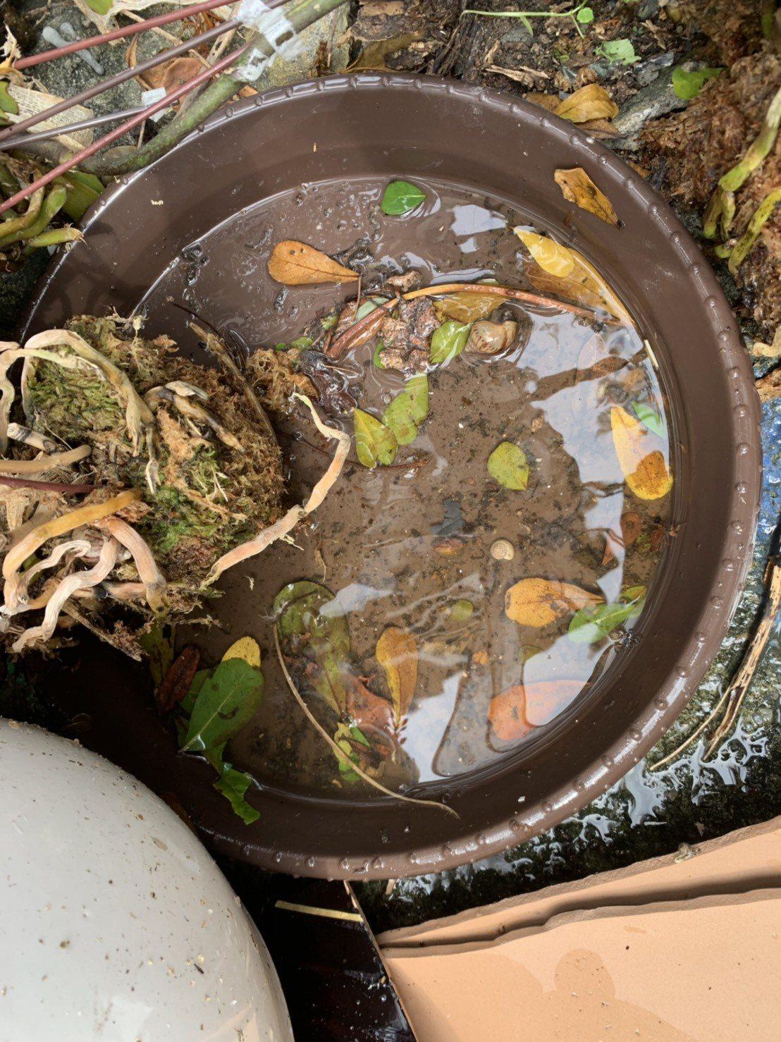 高雄近日強降雨不斷,衛生局提醒民眾雨後應立即清除積水容器,避免病媒蚊孳生,降低疫...
