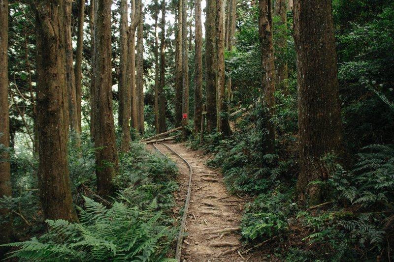 給新手登「加里山」建議心得!雲海、杉木、令人著迷的小百岳