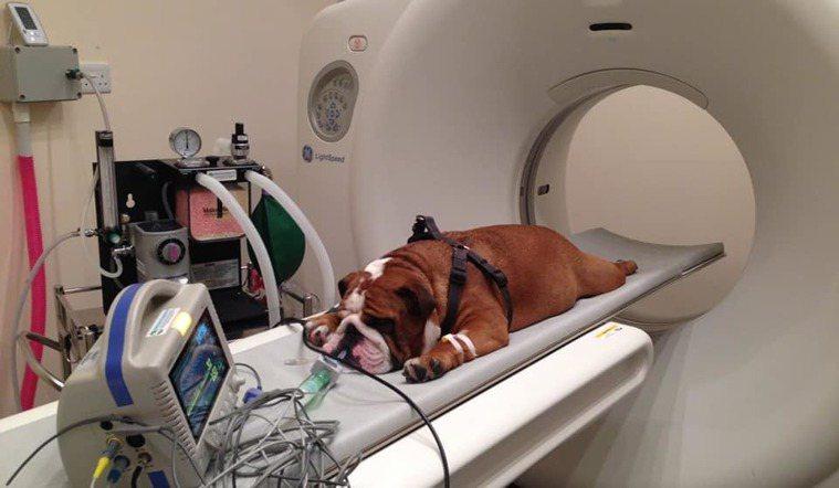 臉書粉絲專頁「Medicine Meets Technology」分享一系列動物...
