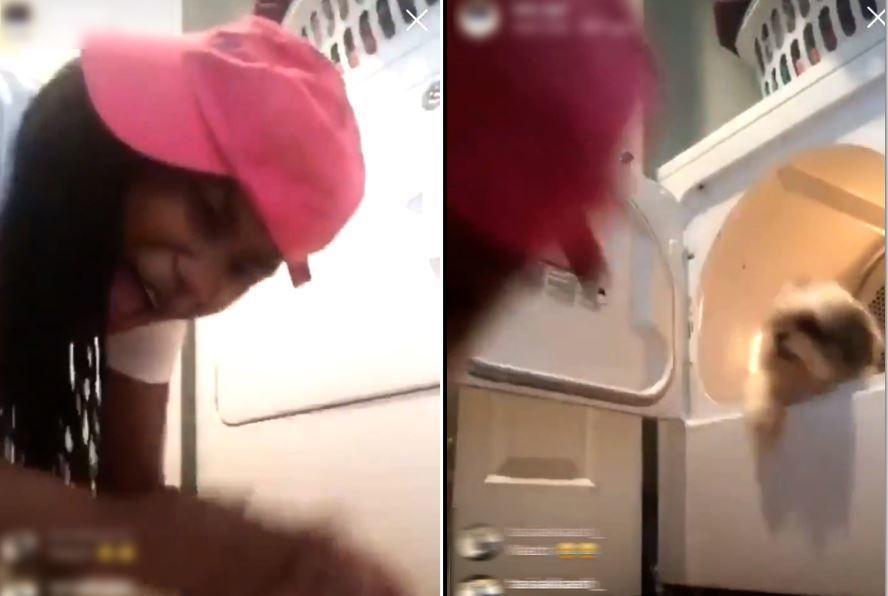 少女將家中的西施犬放進滾筒乾衣機內,開動它並拍手大笑。圖擷自Twitter