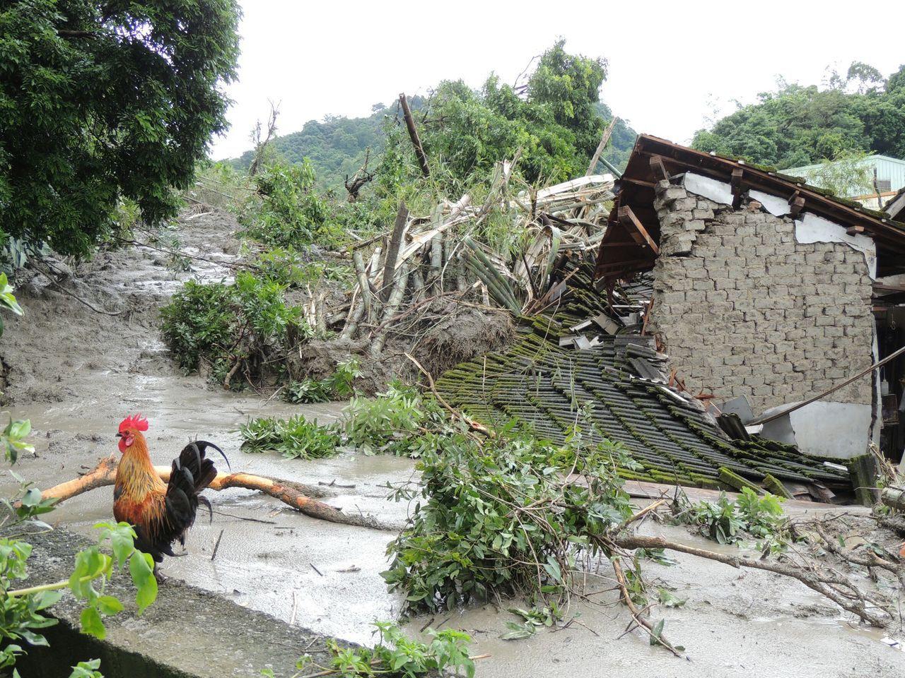 名間鄉仁和村爆發土石流,民宅旁雞窩因擋土牆倒塌淹沒,唯一逃出的公雞守在一旁不肯離...