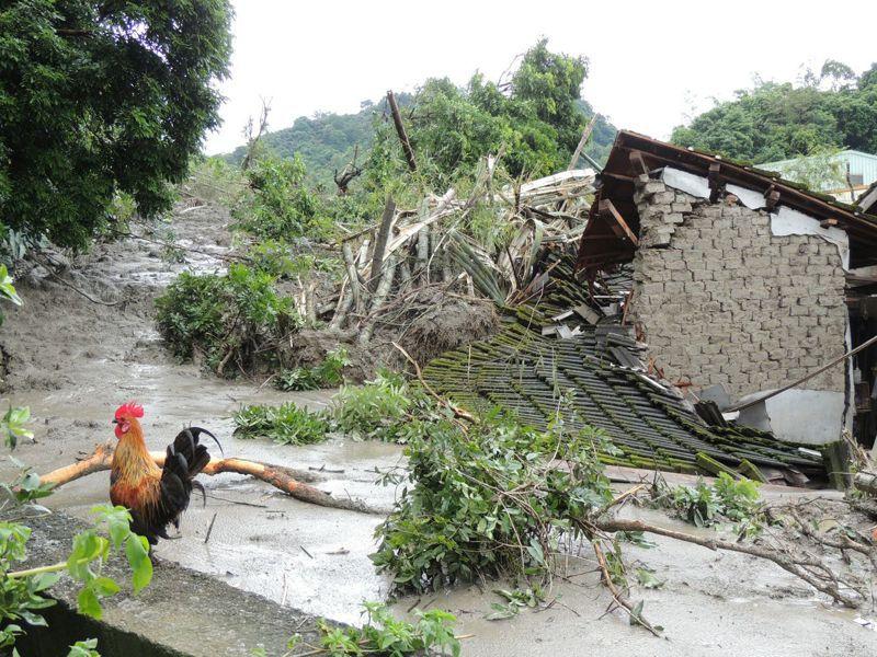 名間鄉仁和村爆發土石流,民宅旁雞窩因擋土牆倒塌淹沒,唯一逃出的公雞守在一旁不肯離去。圖/讀者提供